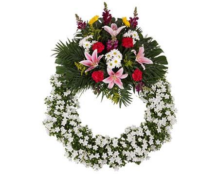 campanilla1 - Podziel się kwiatami