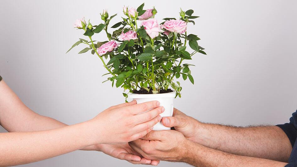 entrega 1 - Podziel się kwiatami