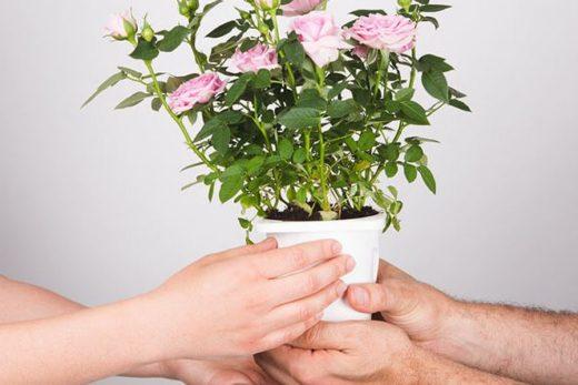 Podziel się kwiatami | Foto: www.thegreenmemory.com/